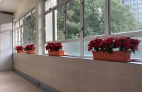綠化課室走廊